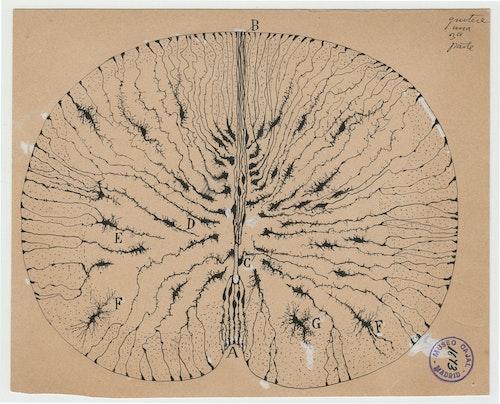 Cajal and the Enchanted Loom, by Rodolfo Llinás